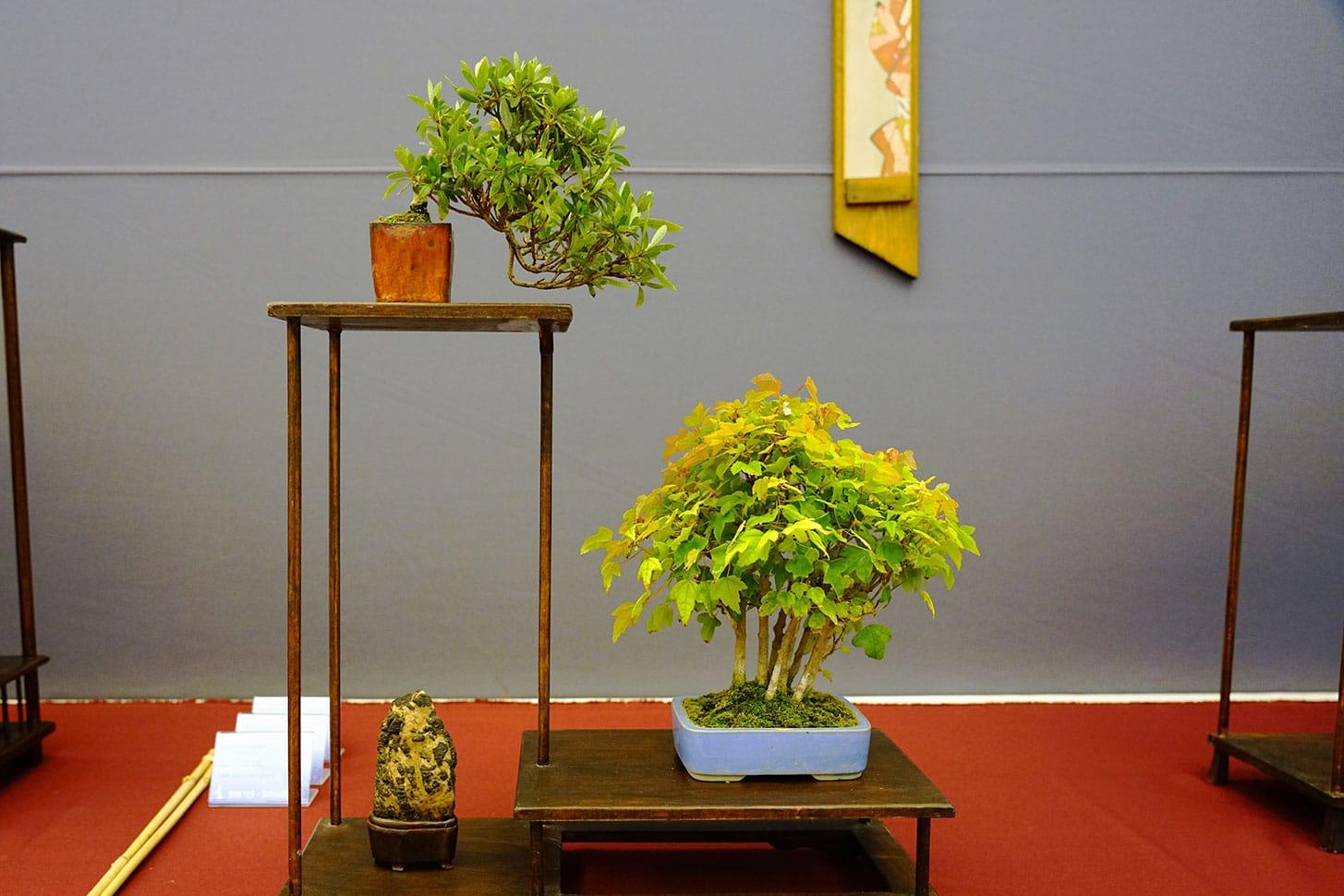 Bonsai-283