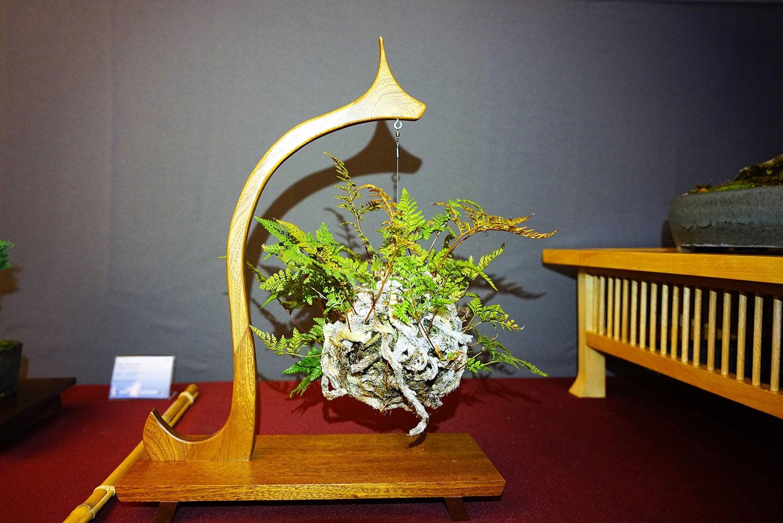 Bonsai-329