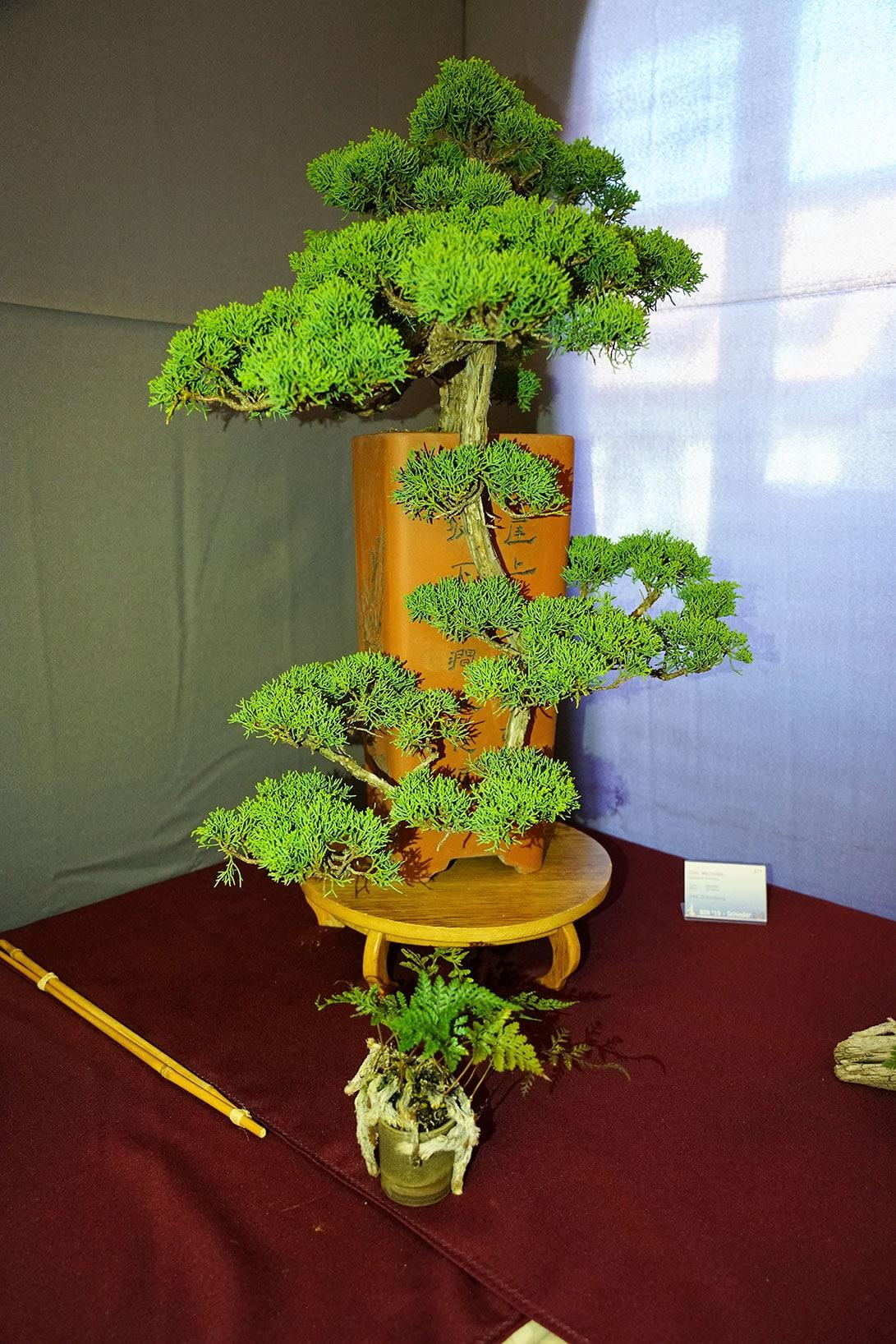 Bonsai-335