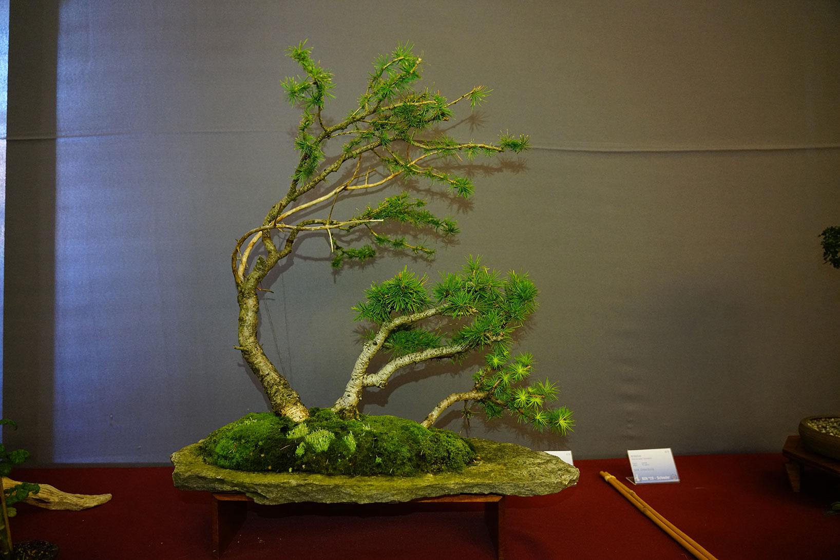 Bonsai-341