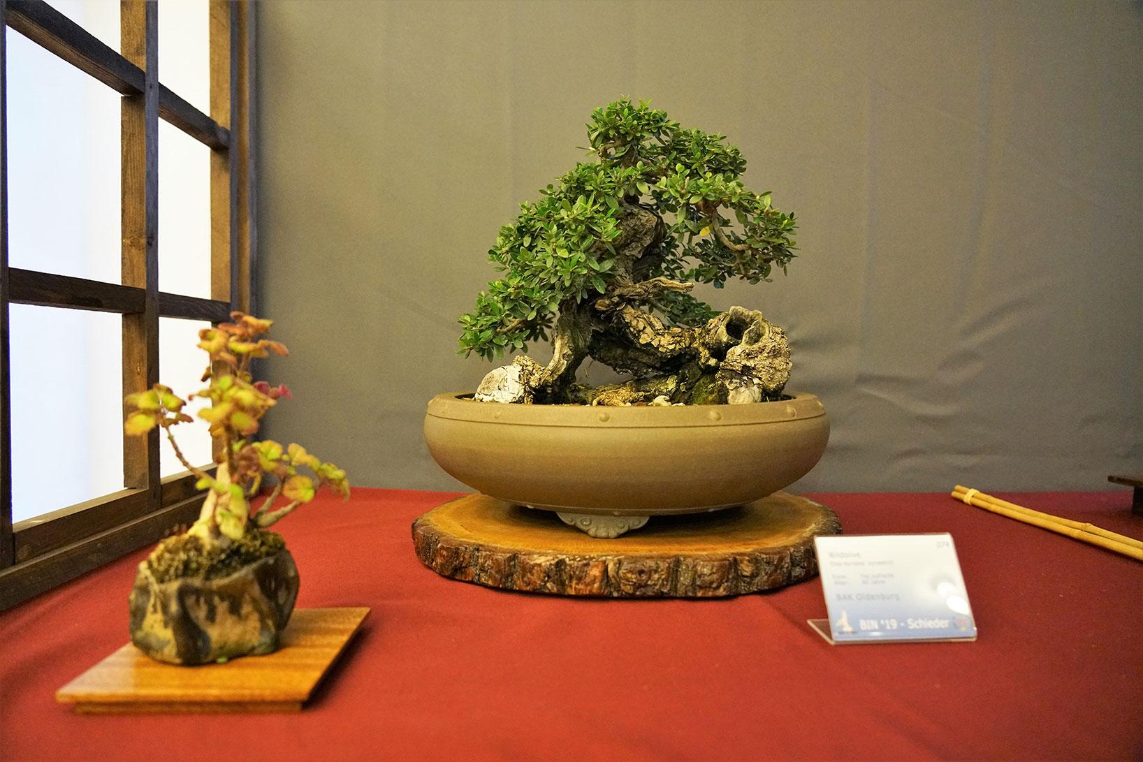 Bonsai-47