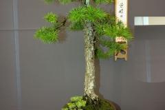 Bonsai-358