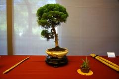 Bonsai-378
