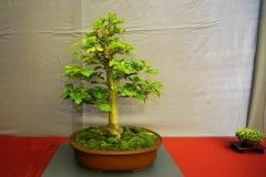 Bonsai-384