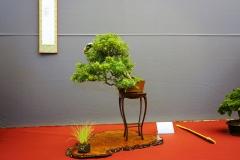 Bonsai-410