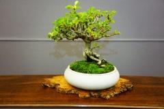 Bonsai-414